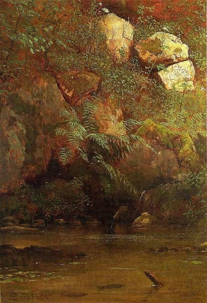 Ferns and Rocks on an Embankment